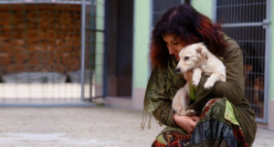 Жителей Подмосковья приглашают на марафон помощи бездомным животным